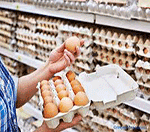 خرید و فروش تخم مرغ