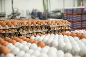 افزایش قیمت تخممرغ