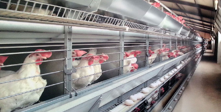 دولت اجازه صادرات تخممرغ را بدهد