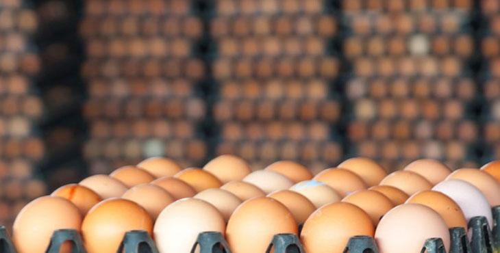 منطقی بودن افزایش قیمت تخم مرغ