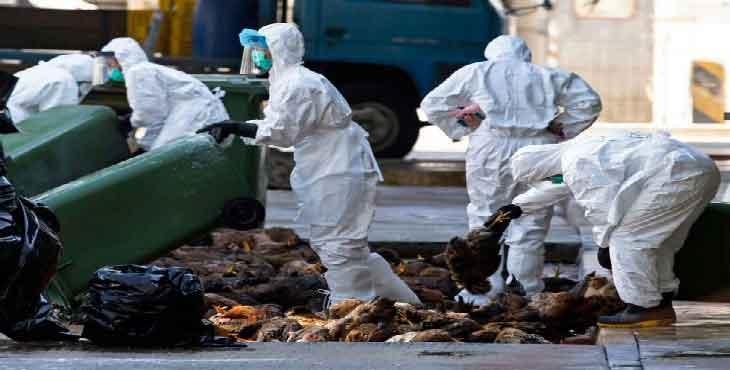20 کانون آلوده به آنفلوآنزای پرندگان در اصفهان شناسایی شد