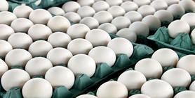 تخم مرغ 10 کیلوگرمی