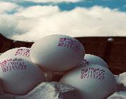 خرید تخم مرغ 11.440 الی 11.500 کیلویی