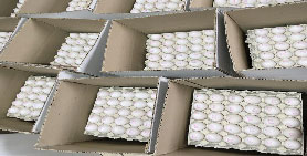خرید تخم مرغ 11.5 الی 11.6 کیلویی