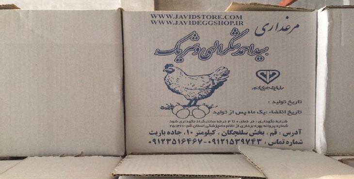 خرید تخم مرغ 11.7 الی 11.8 کیلویی