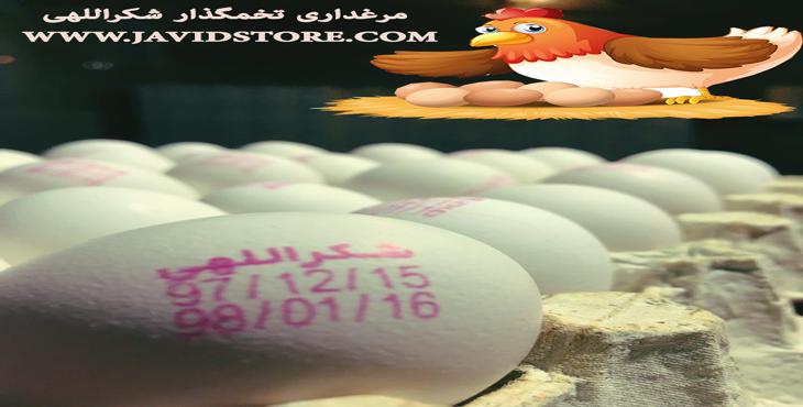 خرید و فروش تخم مرغ 11.900 الی 11.950 کیلویی
