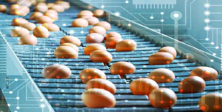 blockchain در صنعت تخم مرغ