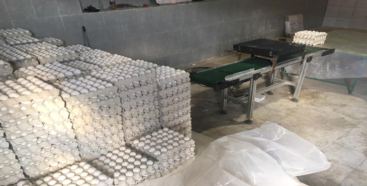 فروش تخم مرغ 10.300 کیلوگرمی،بدون واسطه از درب مرغداری