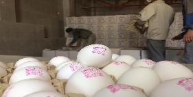 فروش تخم مرغ 12 الی 12.100 کیلویی (روباسکول)