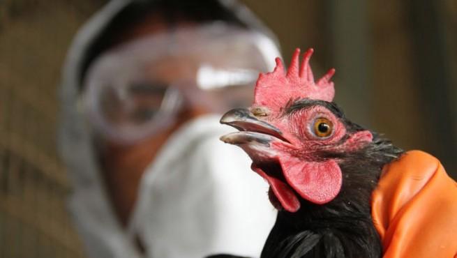 آنفلوانزای فوق حاد پردندگان