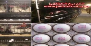 تخم مرغ 12.100 کیلویی الی 12.200 کیلویی