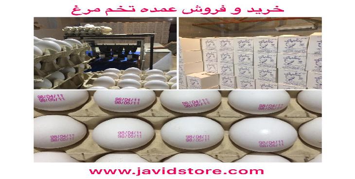 فروش تخم مرغ 12 الی 12.100 کیلویی