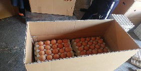فروش تخم مرغ صادراتی- پوست قهوه ای