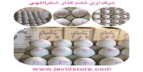 تخم مرغ 12/100 الی12/200 کیلوگرمی