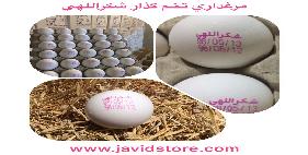 تخم مرغ 12 الی 12/100 کیلویی شکراللهی