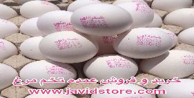 تخم مرغ 12 کیلویی شکراللهی