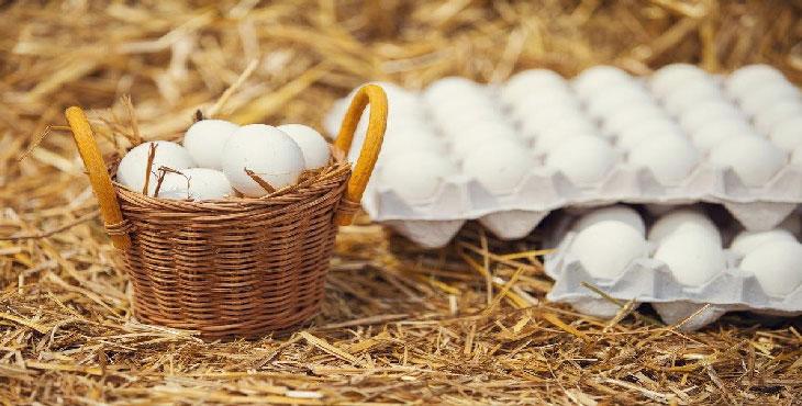 تأمین ۶ درصد تخم مرغ کشور در آبیک