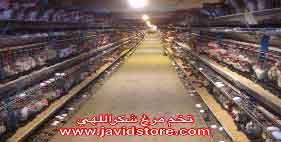 خرید تخم مرغ شکراللهی12/200