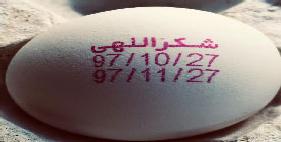 فروش تخم مرغ شکراللهی12/250