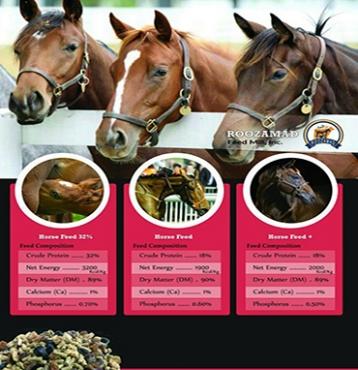 خوراک اسب، غذا اسب