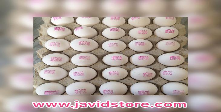 تخم مرغ صنعتی شکراللهی12/200