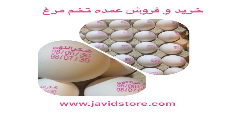 فروش تخم مرغ شکراللهی12/300