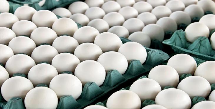 فروش تخم مرغ بهنام