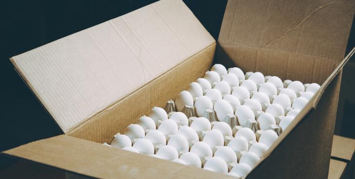تخم مرغ صادراتی تخم مرغ پوست سفید صادراتی