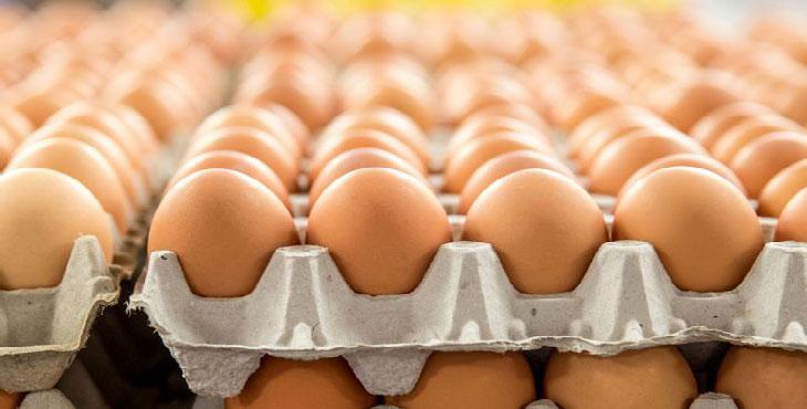 تخم مرغ صادراتی