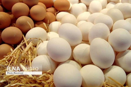 بازار تخم مرغ متعادل است.