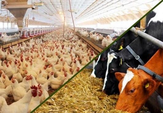 تصمیم عجیب وزارت صنعت برای صادرات خوراک دام و طیور یارانهای