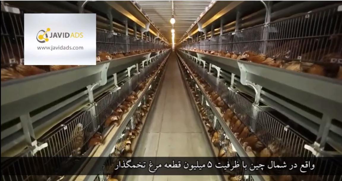 بزرگترین مرغداری تخمگذار در آسیا
