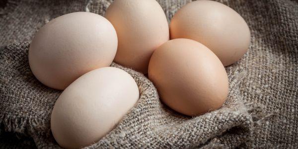 قیمت سویای دامی ۱۵۰ درصد گران شد/هشدار درباره کاهش تولید تخم مرغ