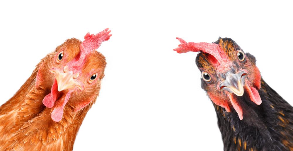 اتخاذ تصمیمات مهم در ستاد تنظیم بازار برای حمایت از صنعت مرغداری/ افزایش۲۶ درصدی واردات نهاده های دامی نسبت به مدت مشابه سال قبل