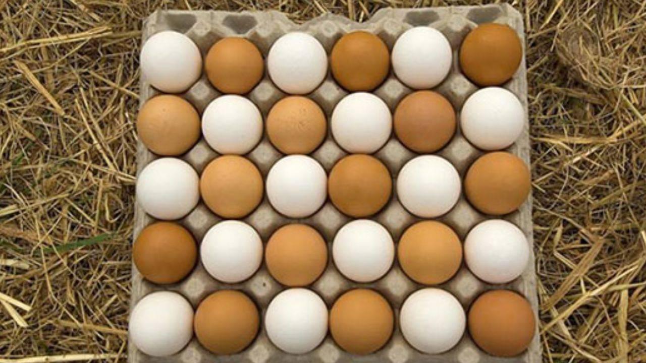 مدیرعامل اتحادیه سراسری مرغ تخمگذار: تخممرغ ۳۰ هزار تومانی ناشی از هیجانات فضای مجازی است