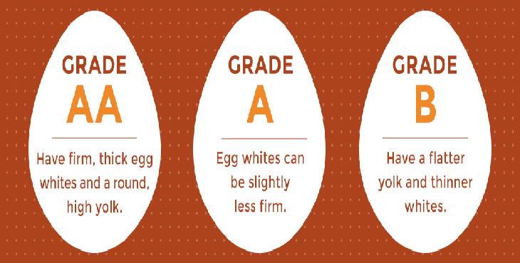 طرح ارتقای کیفیت تخم مرغ تابستان امسال اجرا می شود
