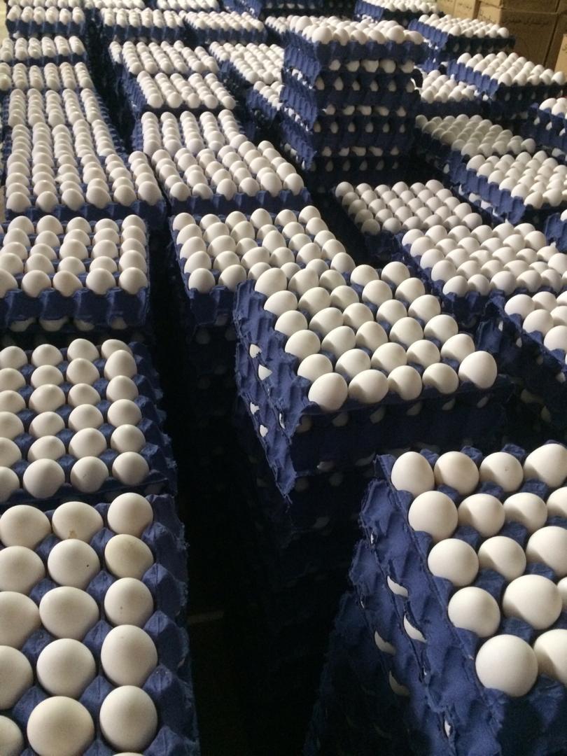 تخم مرغ صادراتی کشور عراق