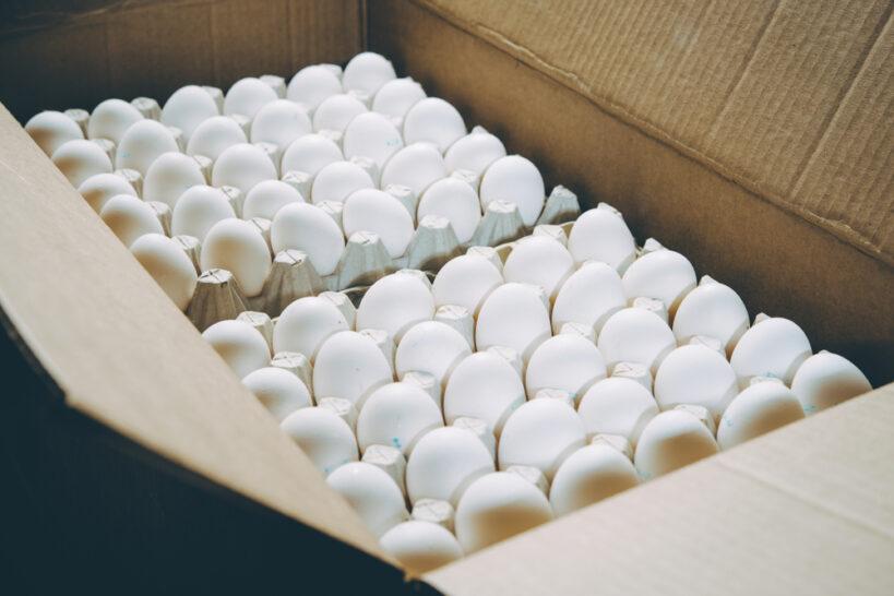 تخم مرغ صادراتی ویژه کشور افغانستان