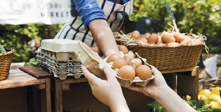 شرطهای تداوم عرضه تخممرغ دولتی