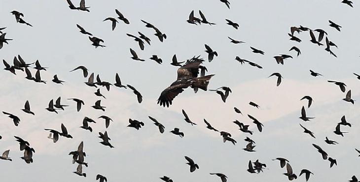 نظارت بر مرغداری ها پیش از شیوع آنفلوانزای فوق حاد پرندگان