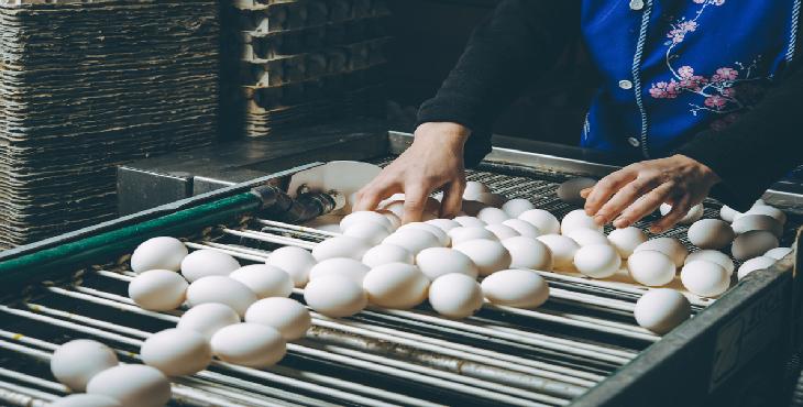پلمپ یک واحد غیر مجاز بسته بندی تخم مرغ