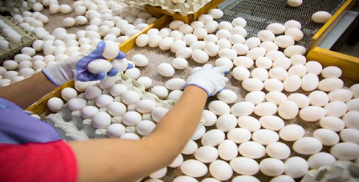 تولید مرغ و تخممرغ در استان فارس مازاد نیاز است
