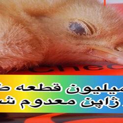 آنفلوآنزای پرندگان به دهمین استان ژاپن رسید؛ ۳ میلیون قطعه طیور معدوم شد.