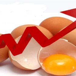 تبعات کاهش ۲۰ درصدی تولید تخممرغ