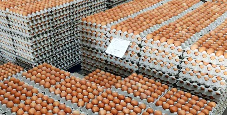 قیمت تخم مرغ متعادل نشود، اجازه صادرات نمیدهیم
