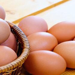 ساخت لانه مرغ جهت تخمگذاری