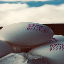 روزانه بیش از ۲۰۰ تن تخممرغ