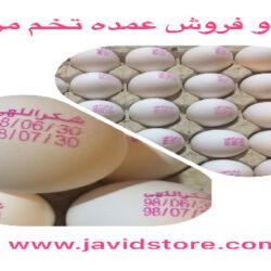 فروش دانه ای تخم مرغ در ساوه ممنوع
