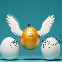 درجه بندی تخم مرغها