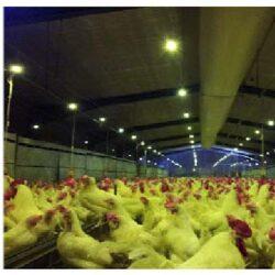 فرصتها و تهدیدها برای طرح زنجیره تولید تخممرغ